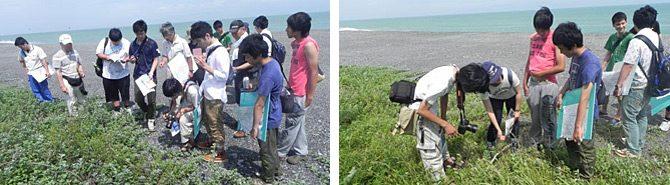 三保海岸で植物の分布調査を実施しました