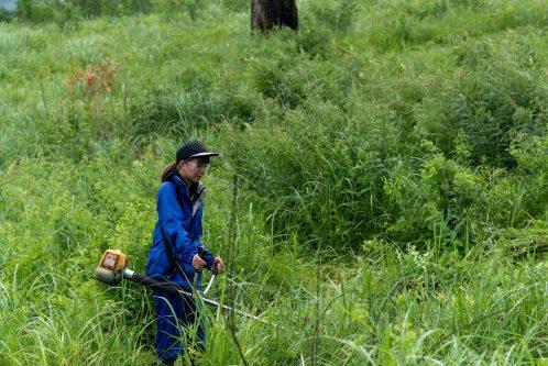 阿蘇の希少な動植物の保全を目的にした活動の様子
