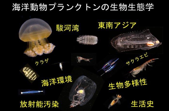 海洋動物プランクトンの種多様性、個体群動態、その他生物生態学