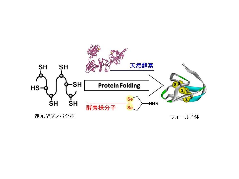 人工の有機化合物を用いた生体酸化還元反応の制御