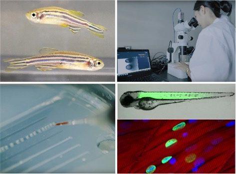 遺伝子工学によって難病の原因をつきとめる