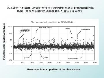 バクテリアの環境適応戦略の分子生物学による解明