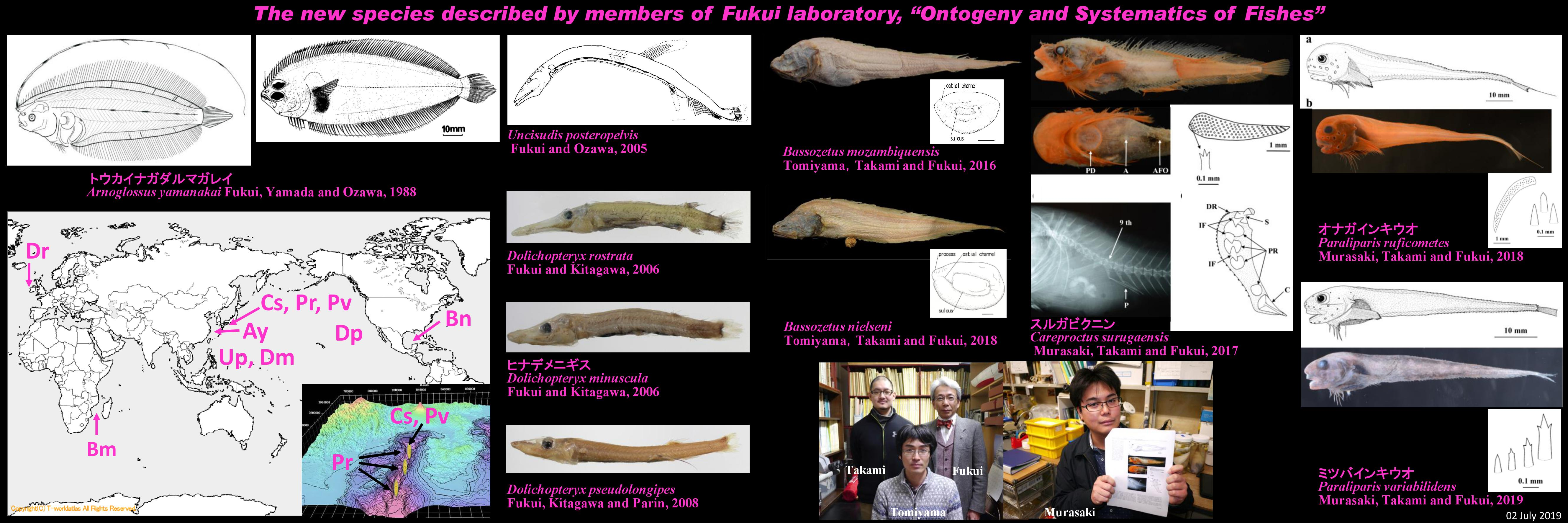 魚類の個体発育と体系学